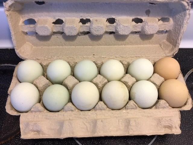 Americana Eggs
