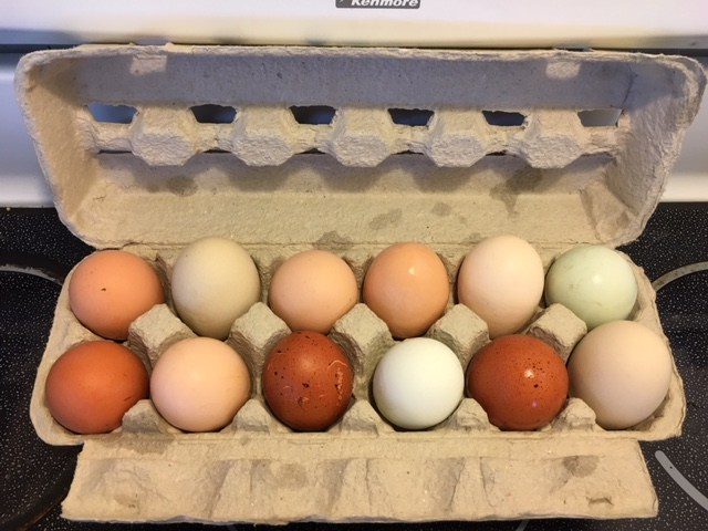 Mixed Olive-Eggers Hatching Eggs