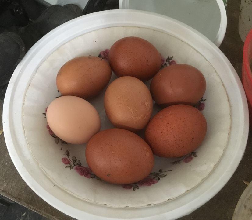 Farm fresh eggs from Rose Hill Farm