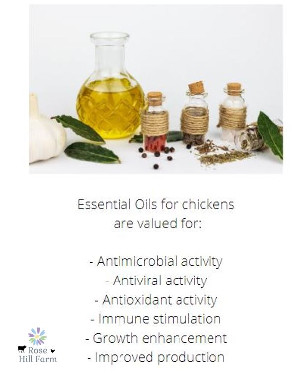 Essential Oils for Chickens Activity
