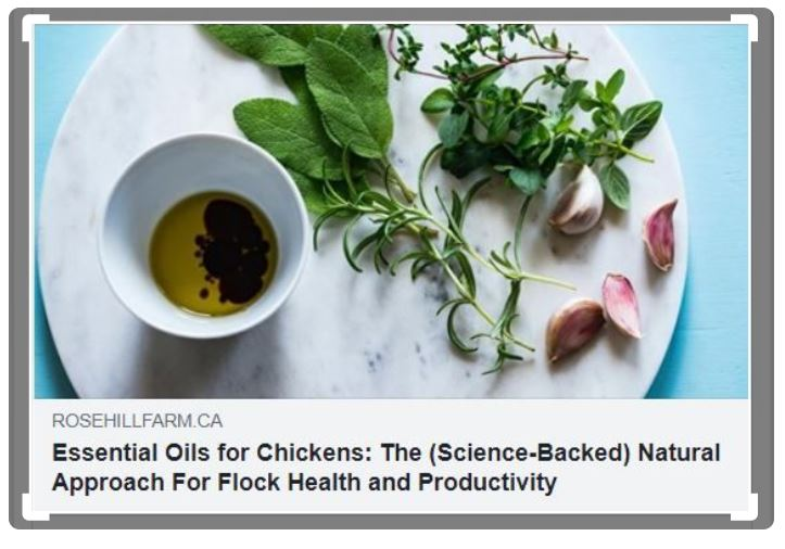 Essential oils for chickens