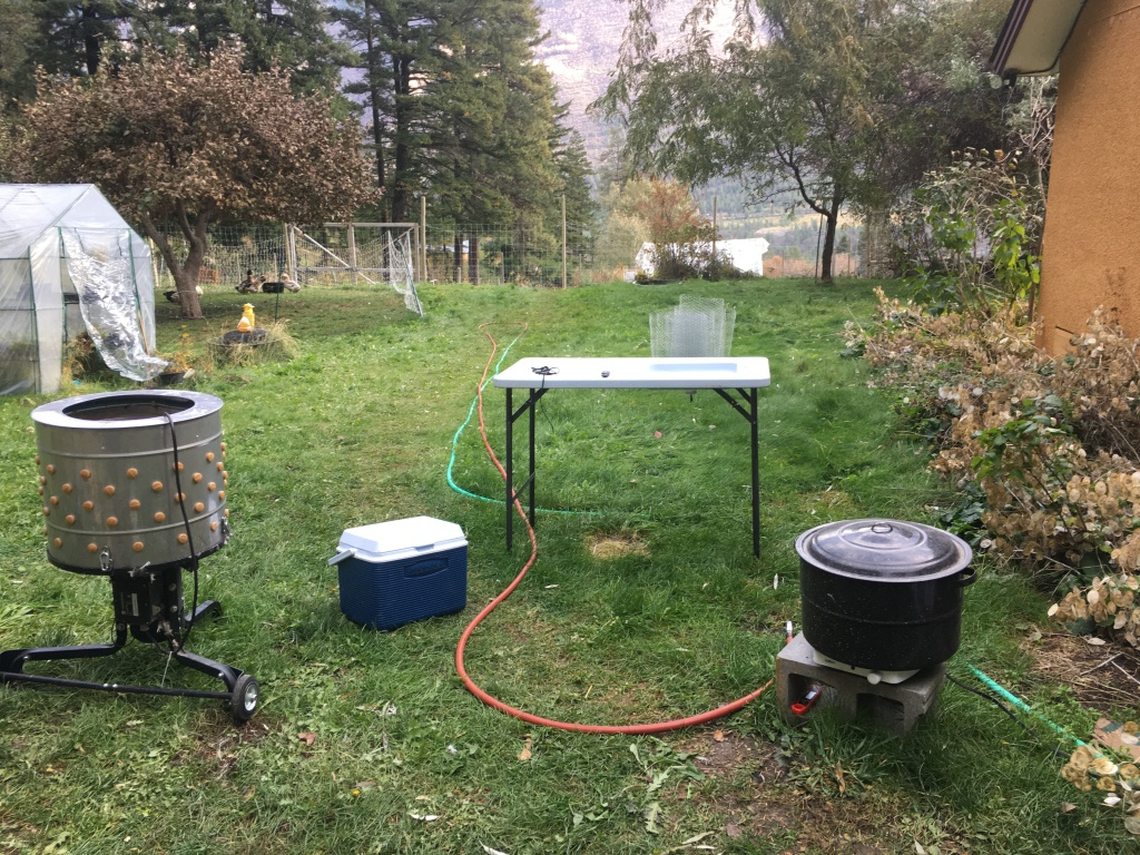 Tools for plucking chickens - plucker - scalder- table - ice chest
