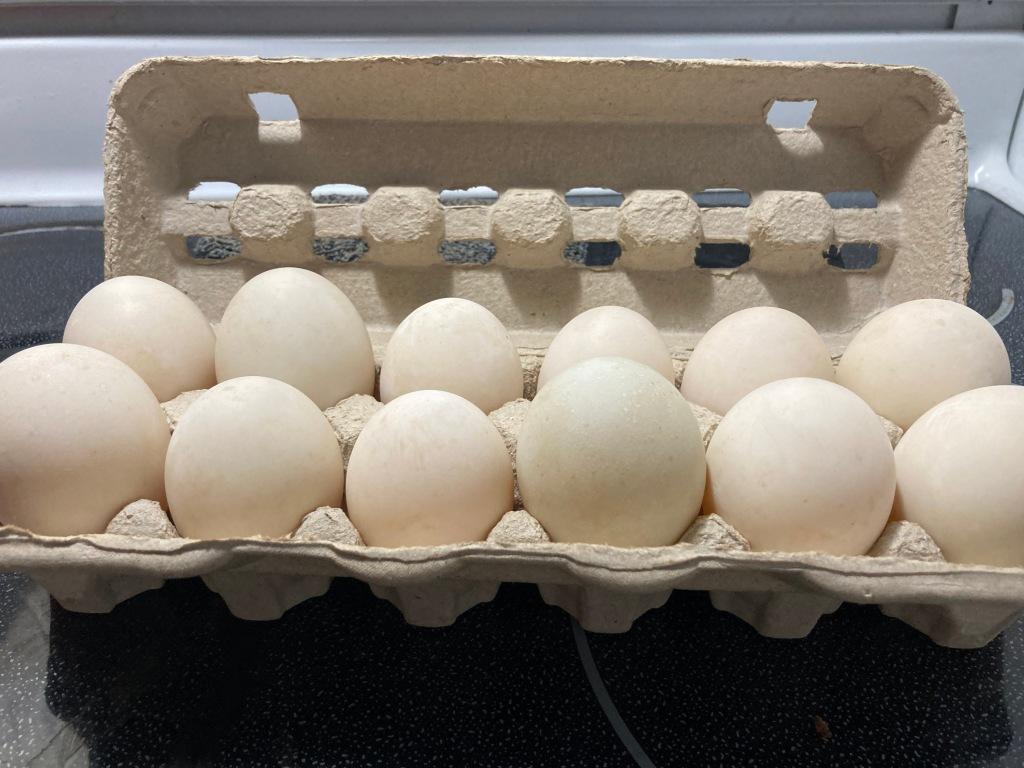 One dozen Silver Appleyard Duck Eggs from Rose Hill Farm